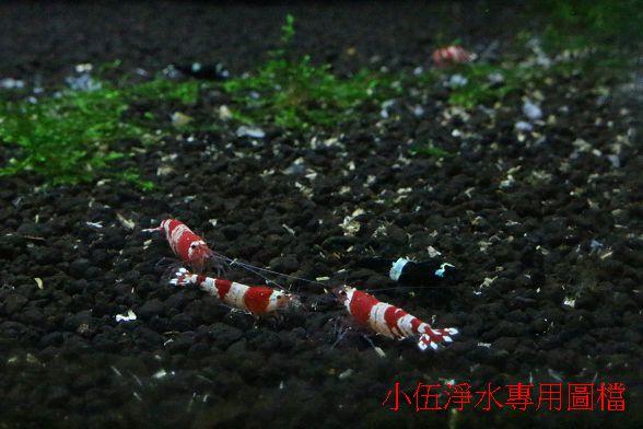 水晶蝦養殖用水系統-淡水 (29)
